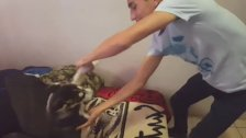 Hombre viola brutalmente a perro después de bailar tremendo cumbion alv :v