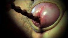 gay sounding dildo toy urethral