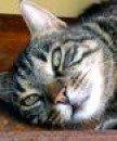 LuxTomcat